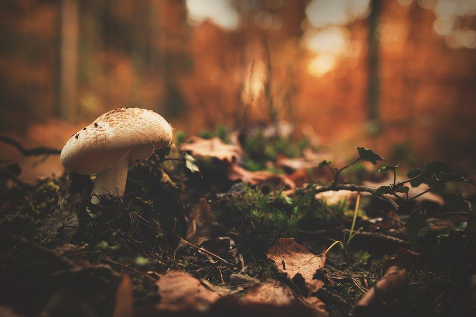 autumn-1867329_960_720