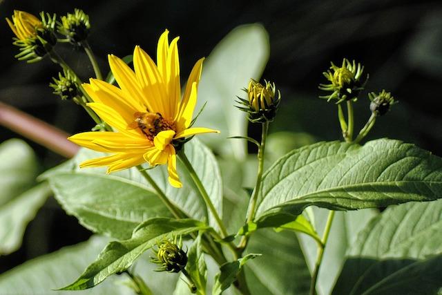 flower-1701588_960_720